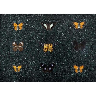 Butterflies by artist Miranda Pissarides