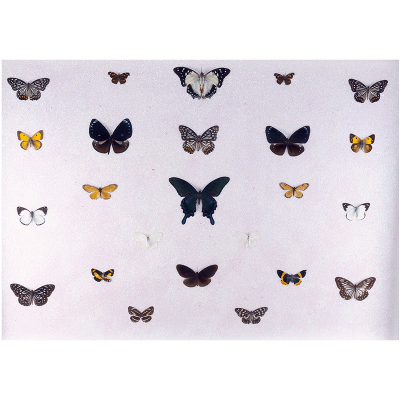 butterfly collection I - artist Miranda Pissarides