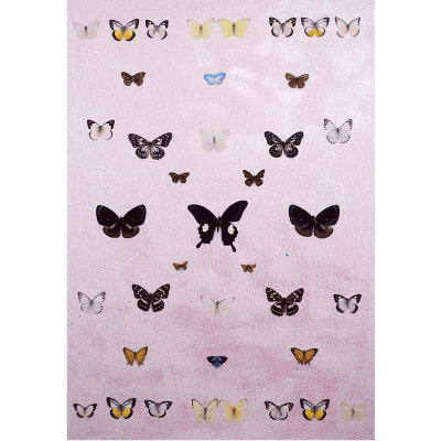 miranda pissarides butterfly collection ii
