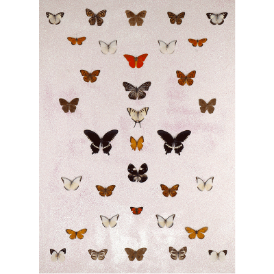 miranda pissarides - butterfly collection III