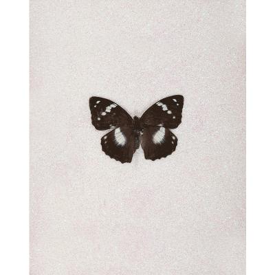 miranda pissarides butterfly vi