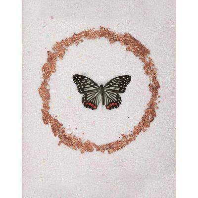miranda pissarides butterfly viii
