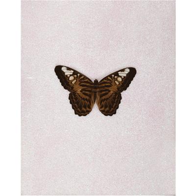 miranda pissarides butterfly xiii